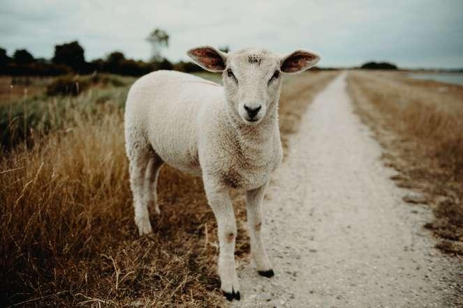Jeremiah's Menu-Feed My Sheep-Messy