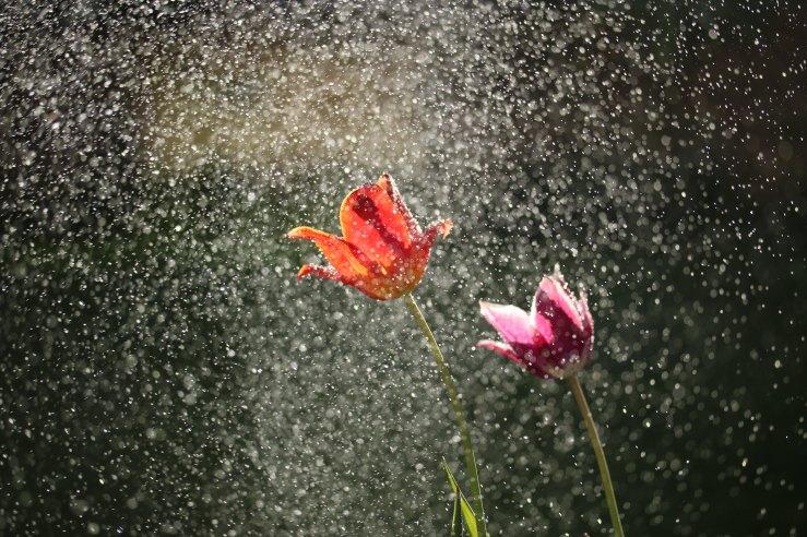 Jeremiah's Menu-Shower of blessing-Faith.jpg