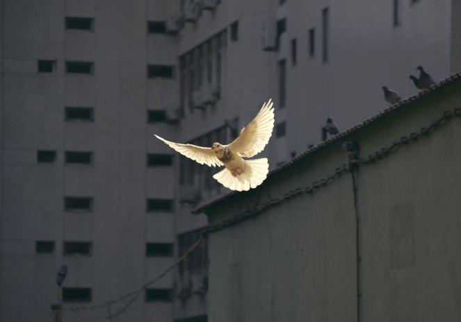 Peace-Tribulation-World-Word-Truth-Jeremiah's Menu