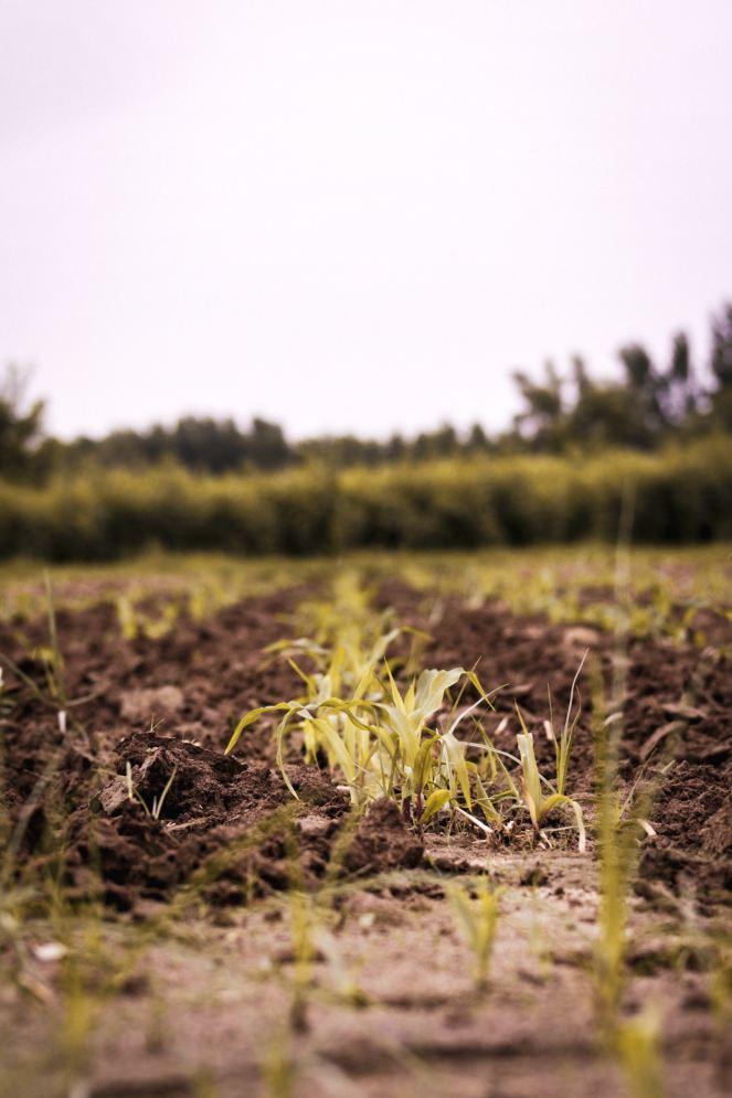 farming-spiritual growth-Jeremiah's Menu-faith